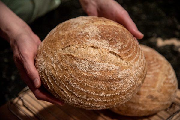 Dutch Oven Bread using All-Purpose Flour